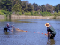 Two biologists pull a net through the lake
