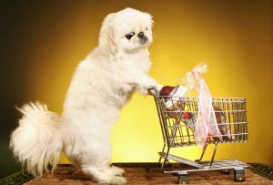 dog pushing a shopping cart