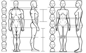 The Importance Of Proportion In Art By Myra Naito Medium
