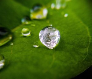 Blur the background to make the stunning water droplet pop off the screen