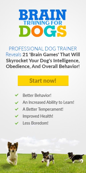 Obedience Training Commands Brain Training 4 Dogs  For Under 300