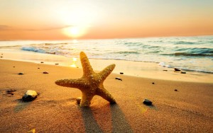 evren-cover-sea-star-on-the-beach-at-sunset-2560x1600