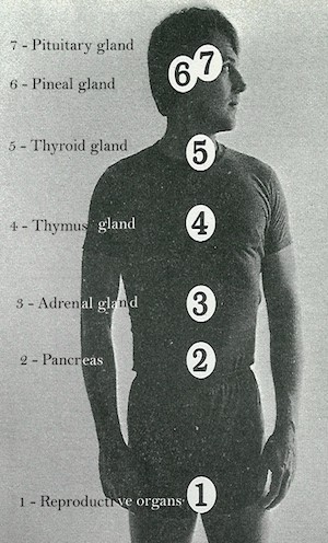 1970s photo of man with numbers showing the location of the thymus and other glands of the endocrine system