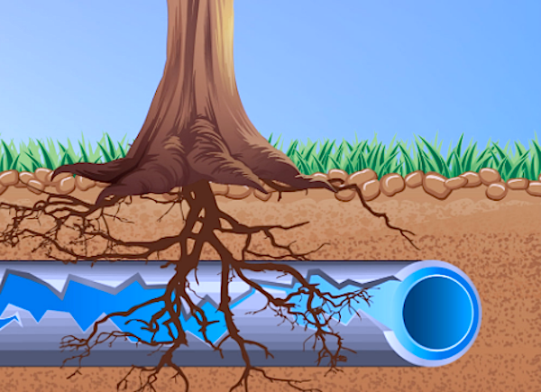 Tree Root Killer & Sewer Pipe Clog Facts from Reliable Contractor Services  | by James Huber | Medium