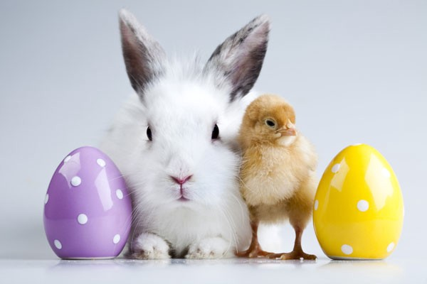 Where Do Easter Bunnies and Eggs Come From? The Answer ...