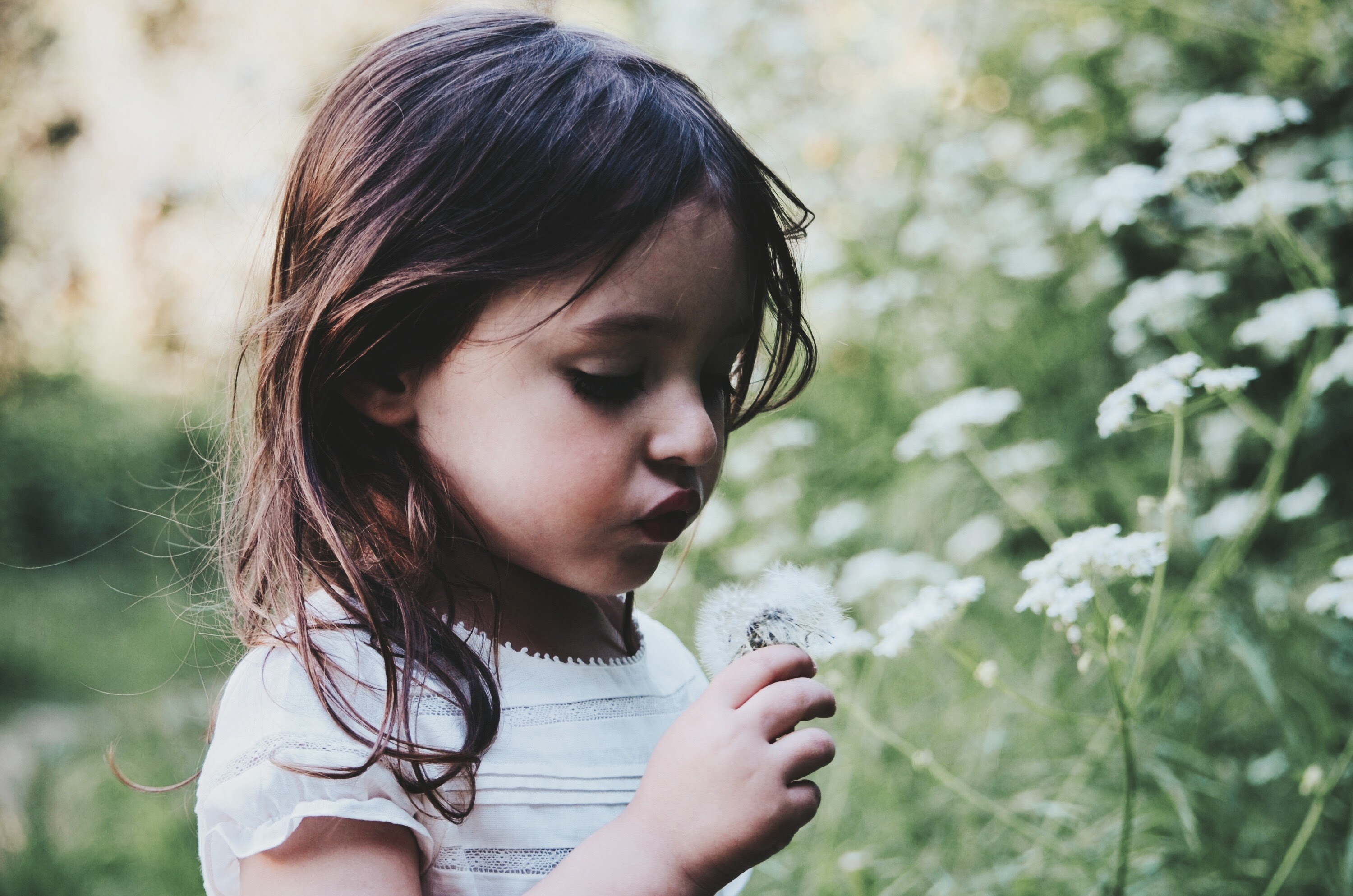 A little girl in a field holding a dandelion with flowers surrounding her