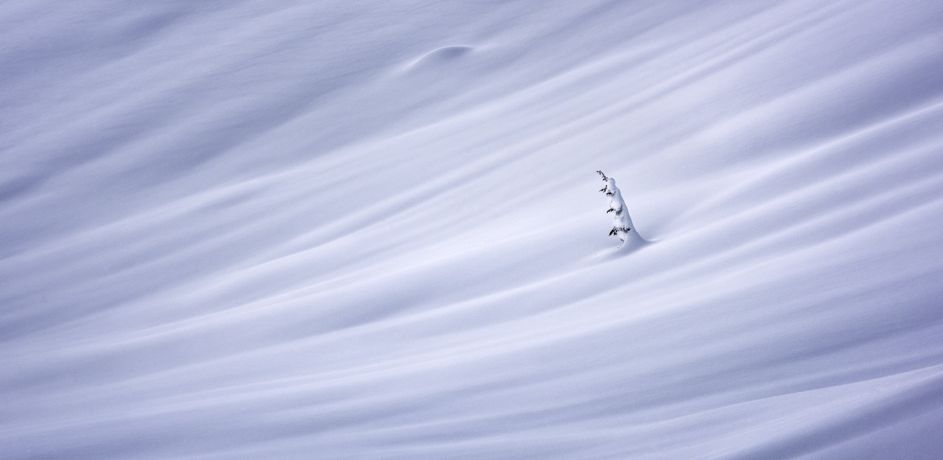 A fine art photograph of a single tree standing amongst a windswept hill blanketed in thick snow