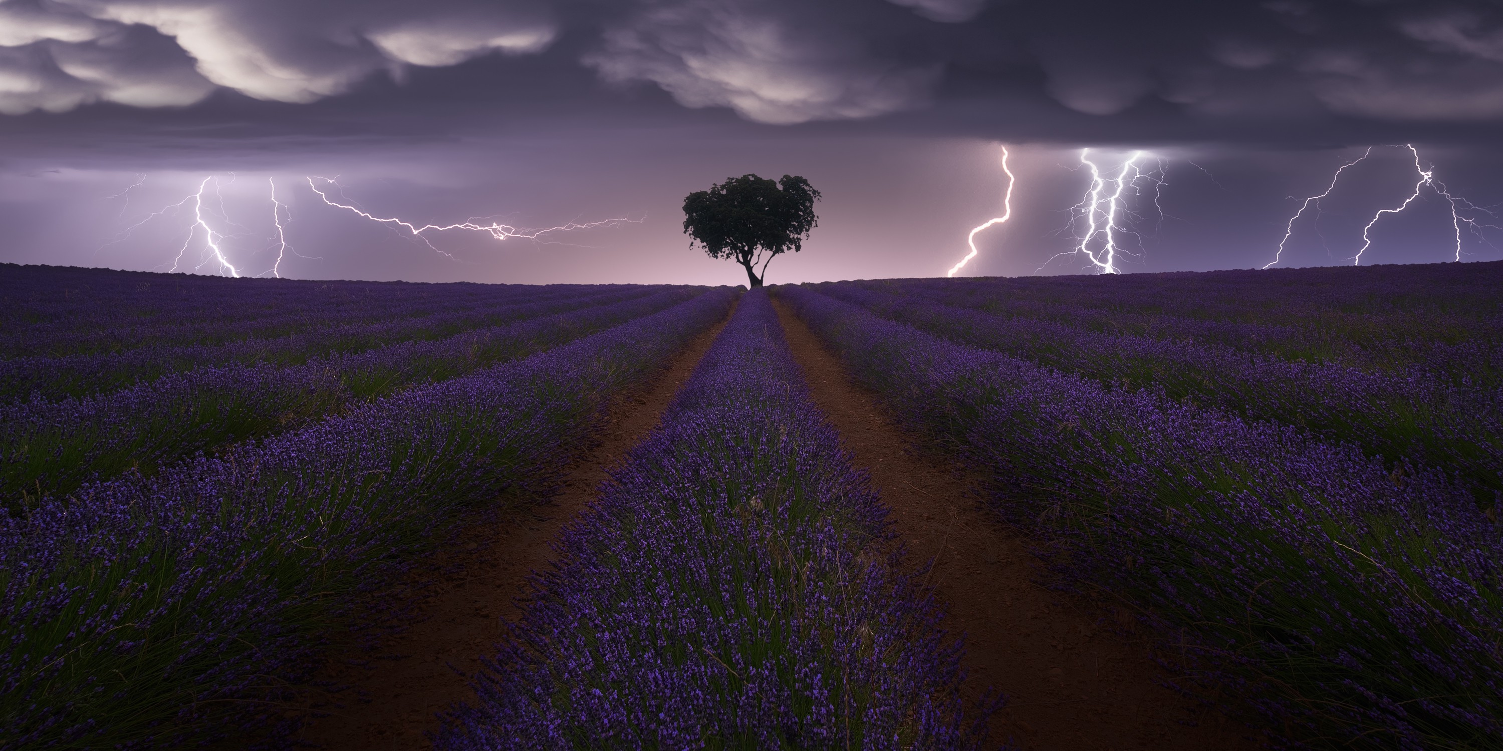 Lightning striking near a field of purple plants with a single tree sillouhetted by the purple sky