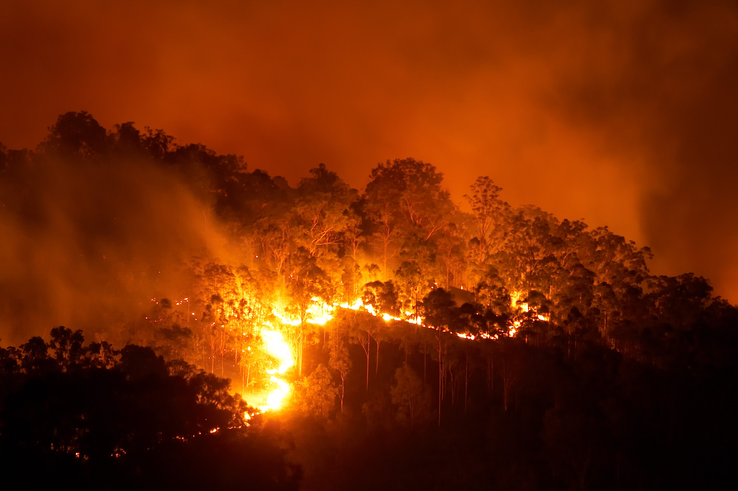 Wildfire blaze in a forest