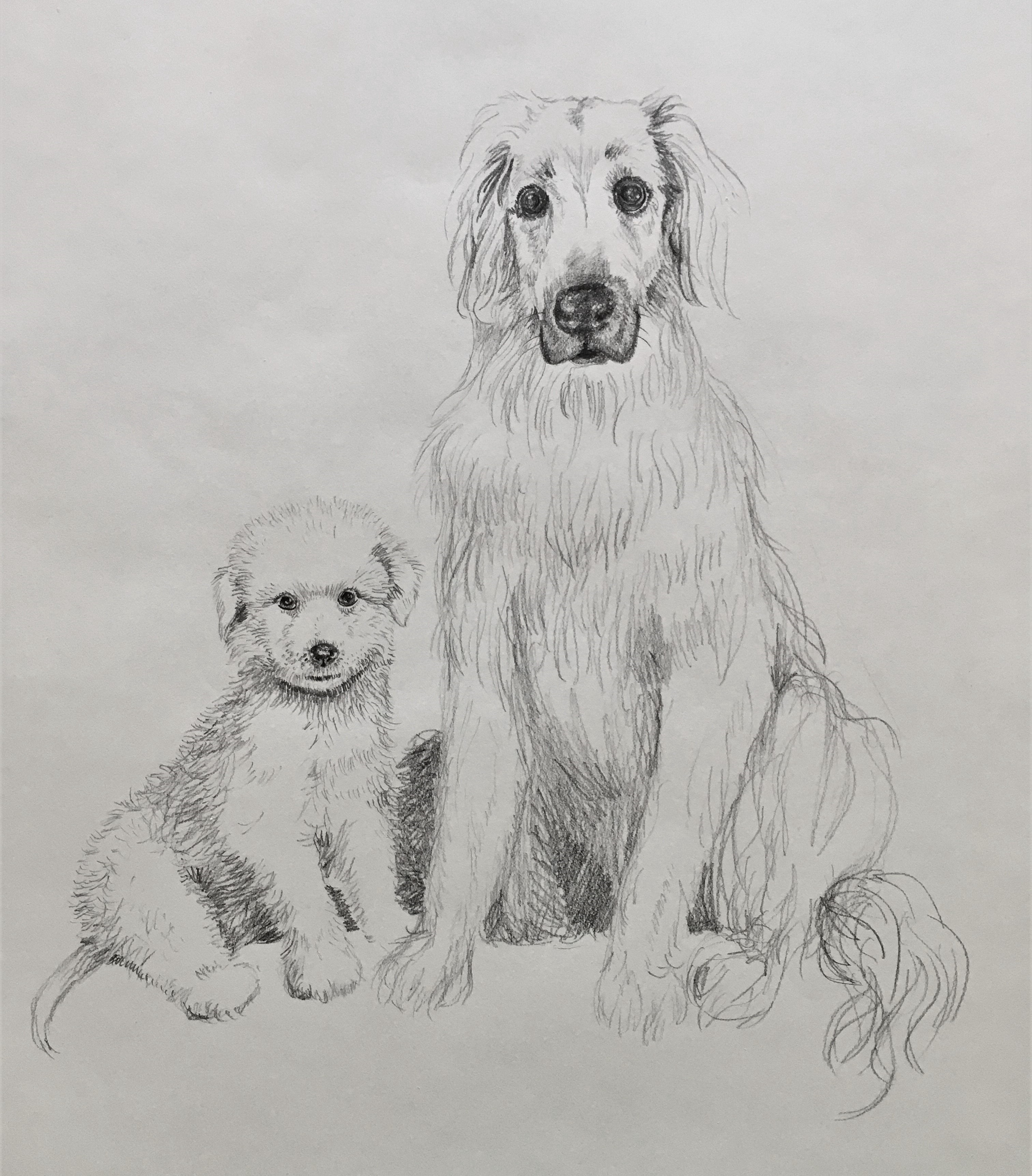 A photorealistic pencil drawing of a two fluffy Great Pyrenees dogs, one a floppy pup and the other looking quite serious.
