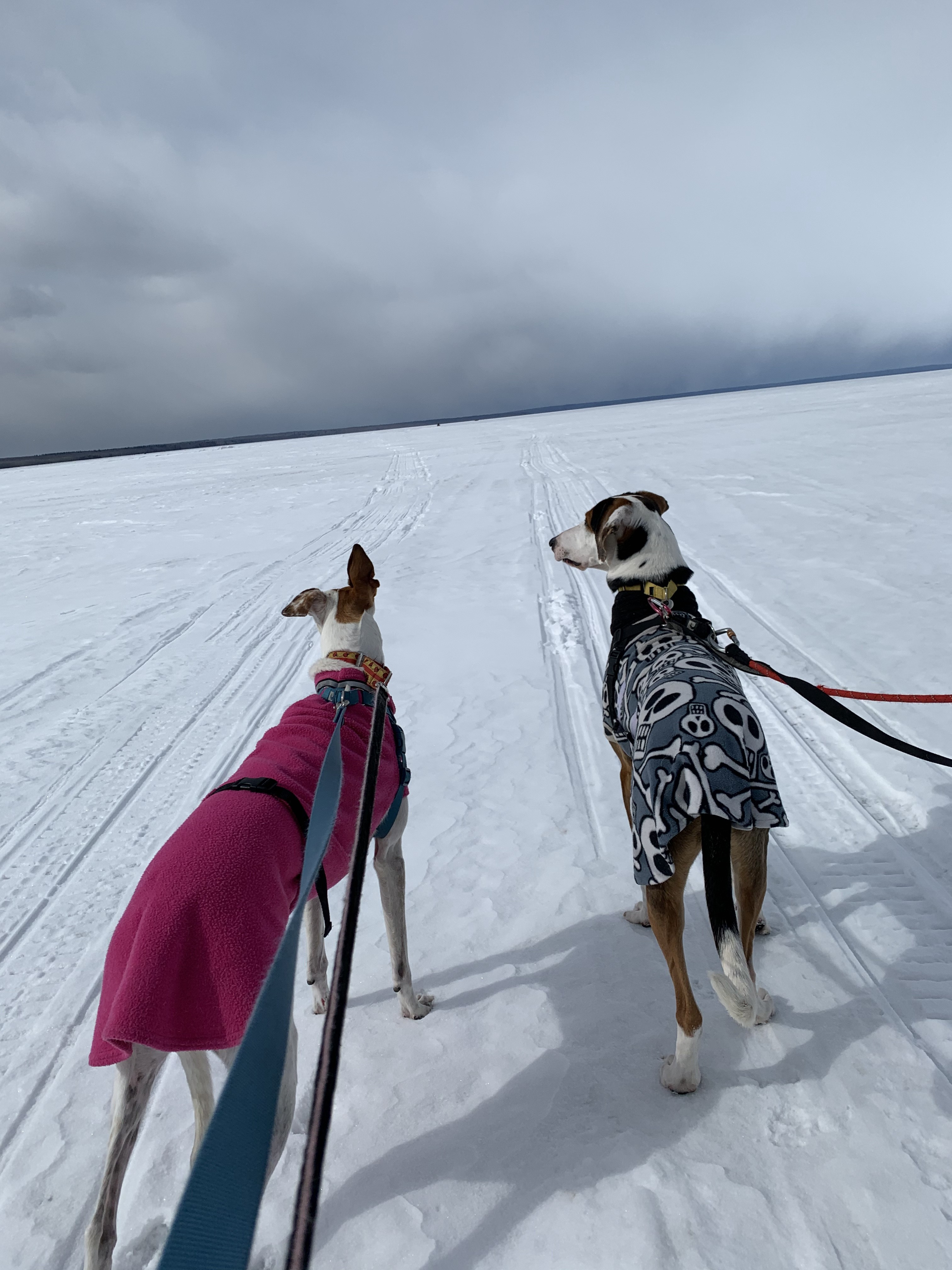 Two beautiful large dogs in winter coats are in the foreground facing the background. They are leashed and standing on a frozen snowy lake, looking out into the misty, cloudy horizon.