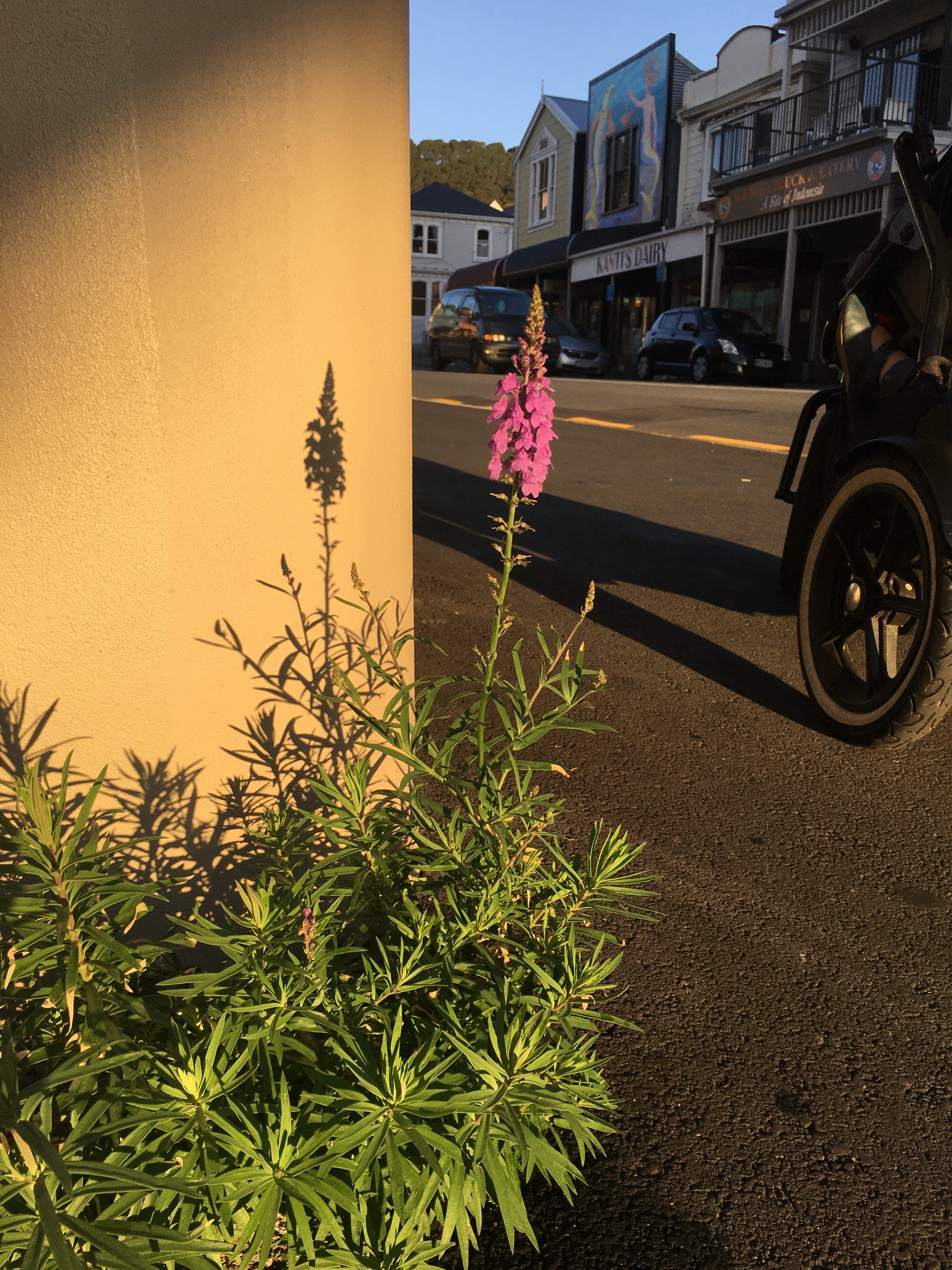 A purple flower and it's long shadow on a concrete wall, in the evening lowlight. A baby stroller in the background.