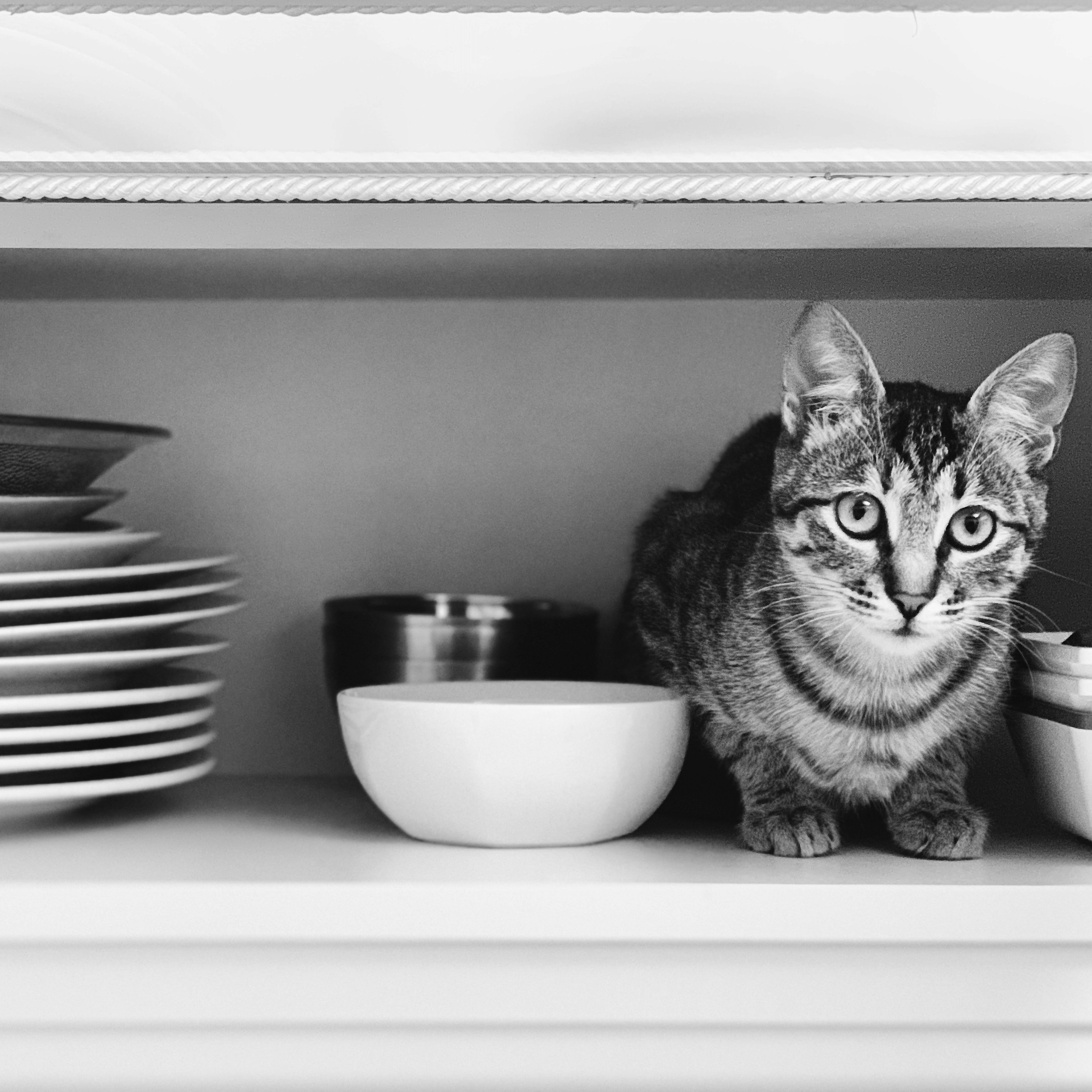 Cat in a cupboard with dishes