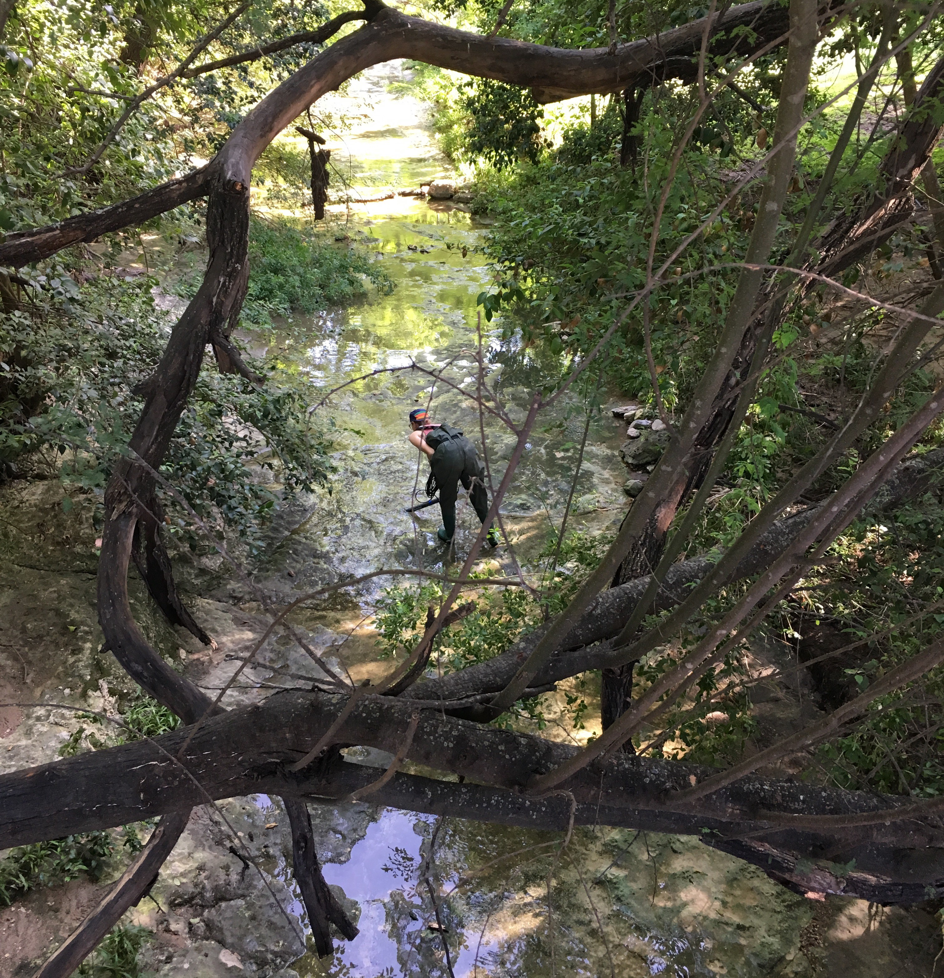 A student researcher at UT stands in part of Bull Creek in Austin, Texas, collecting water samples.