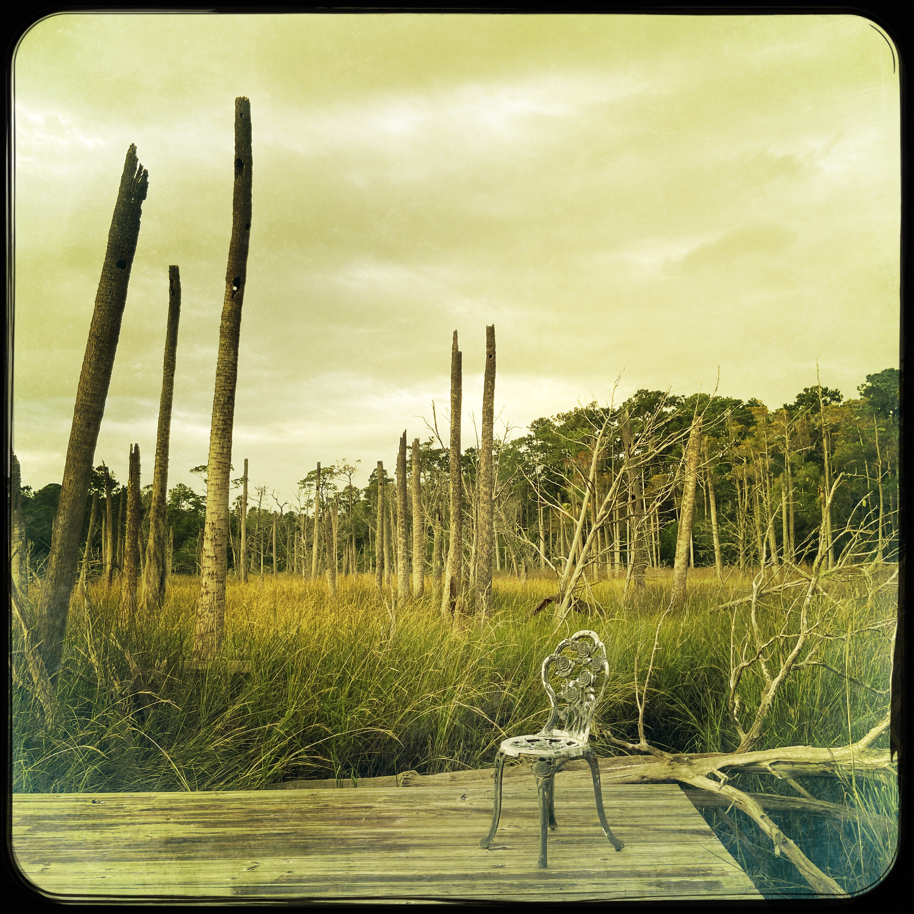 Ghost Forest in JAX, Fl—photo by James Hunter