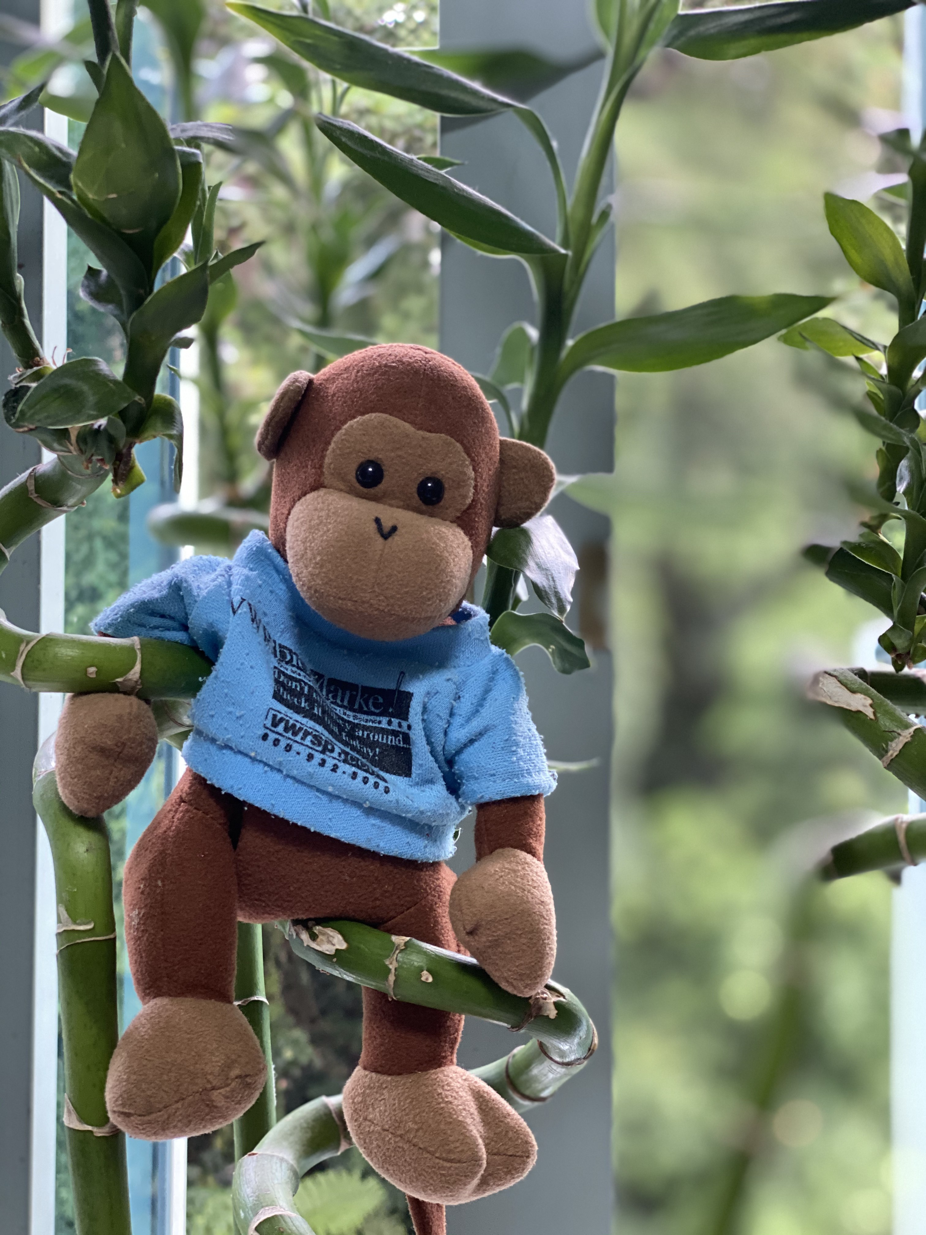 Toy monkey with a blue shirt