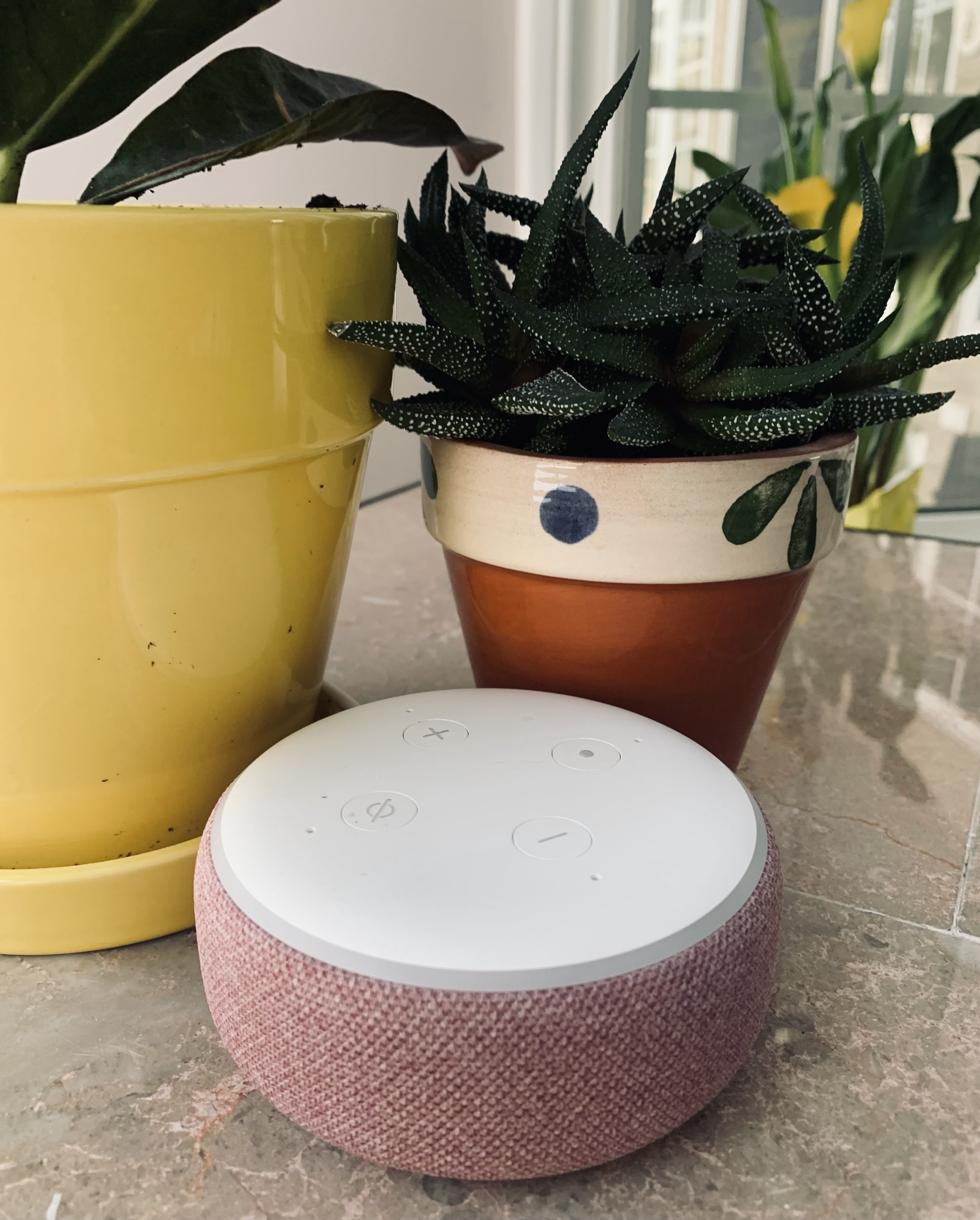 Echo Dot 3 on marble coffee table, with potted plants