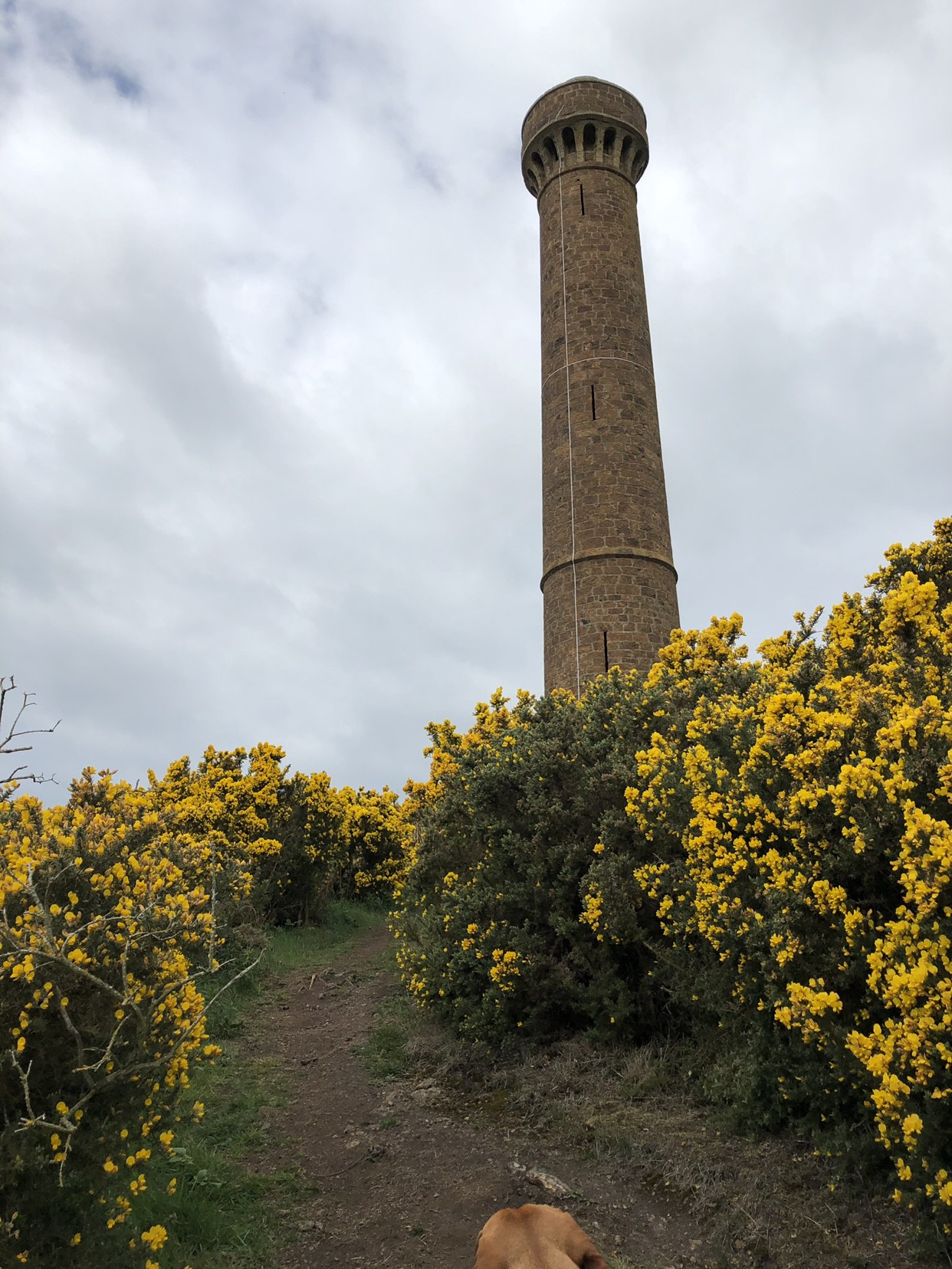 Afternoon stroll to Hopetoun Monument   by Christian Taylor   Medium