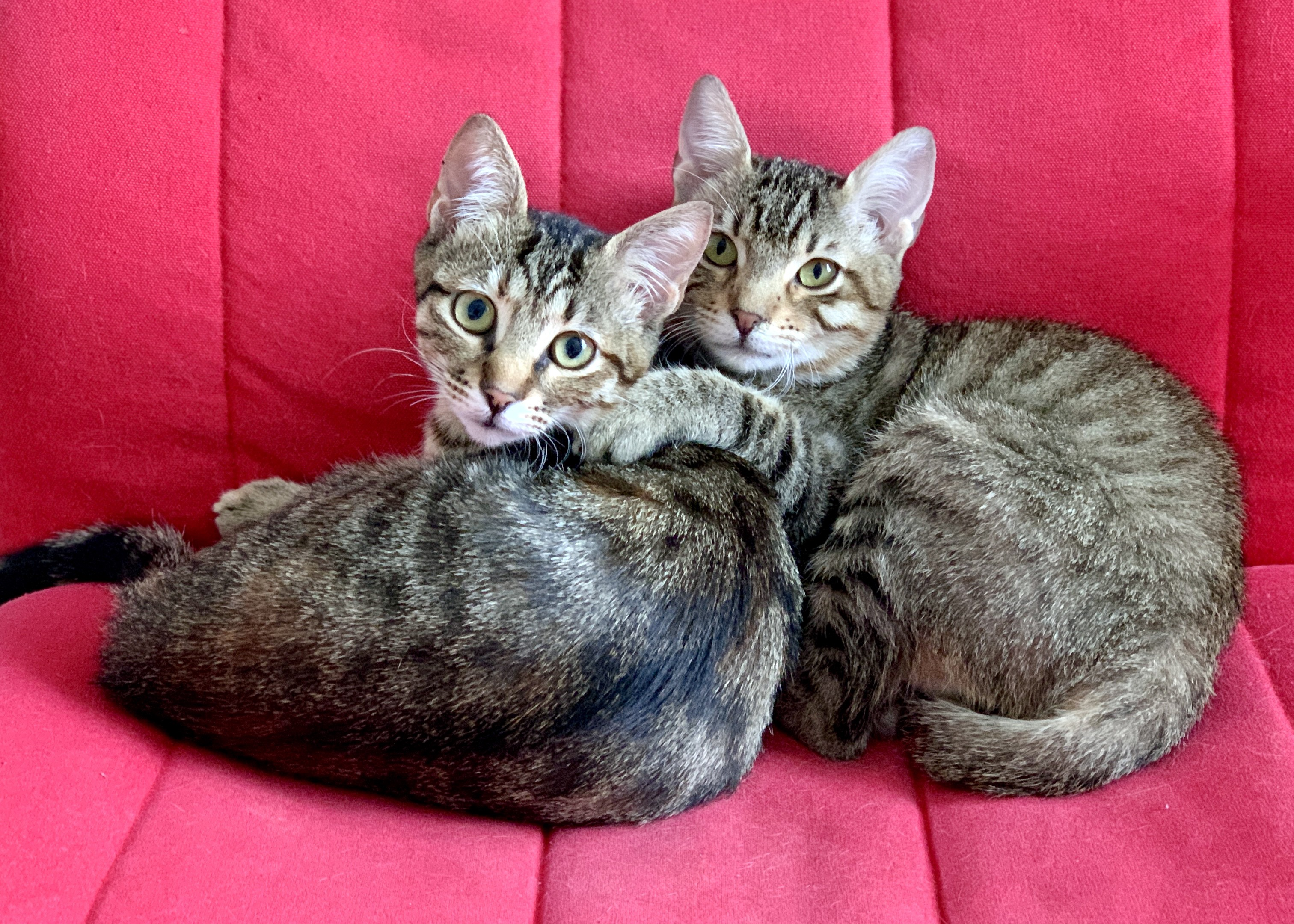 Two cats on a red chair