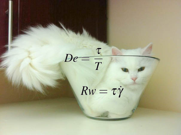 Are Cats Liquid?. Cat science. | by Panda the Red | Tenderly