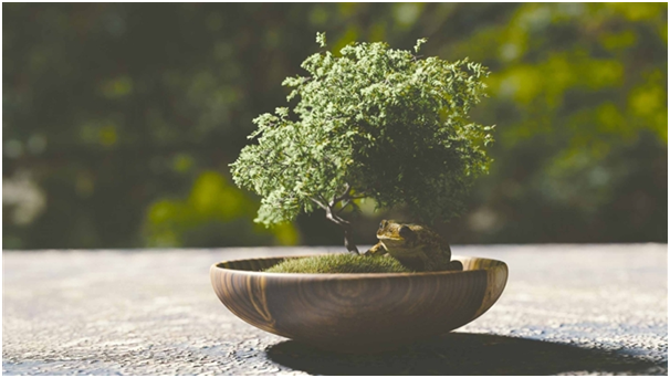 Top Benefits of the Bonsai Plants That Make It a Must-Buy for Your ...