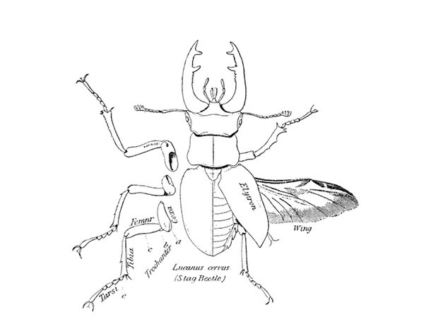 Listing of all insects bugs and spiders to be found in the InsectIdentificationorg database