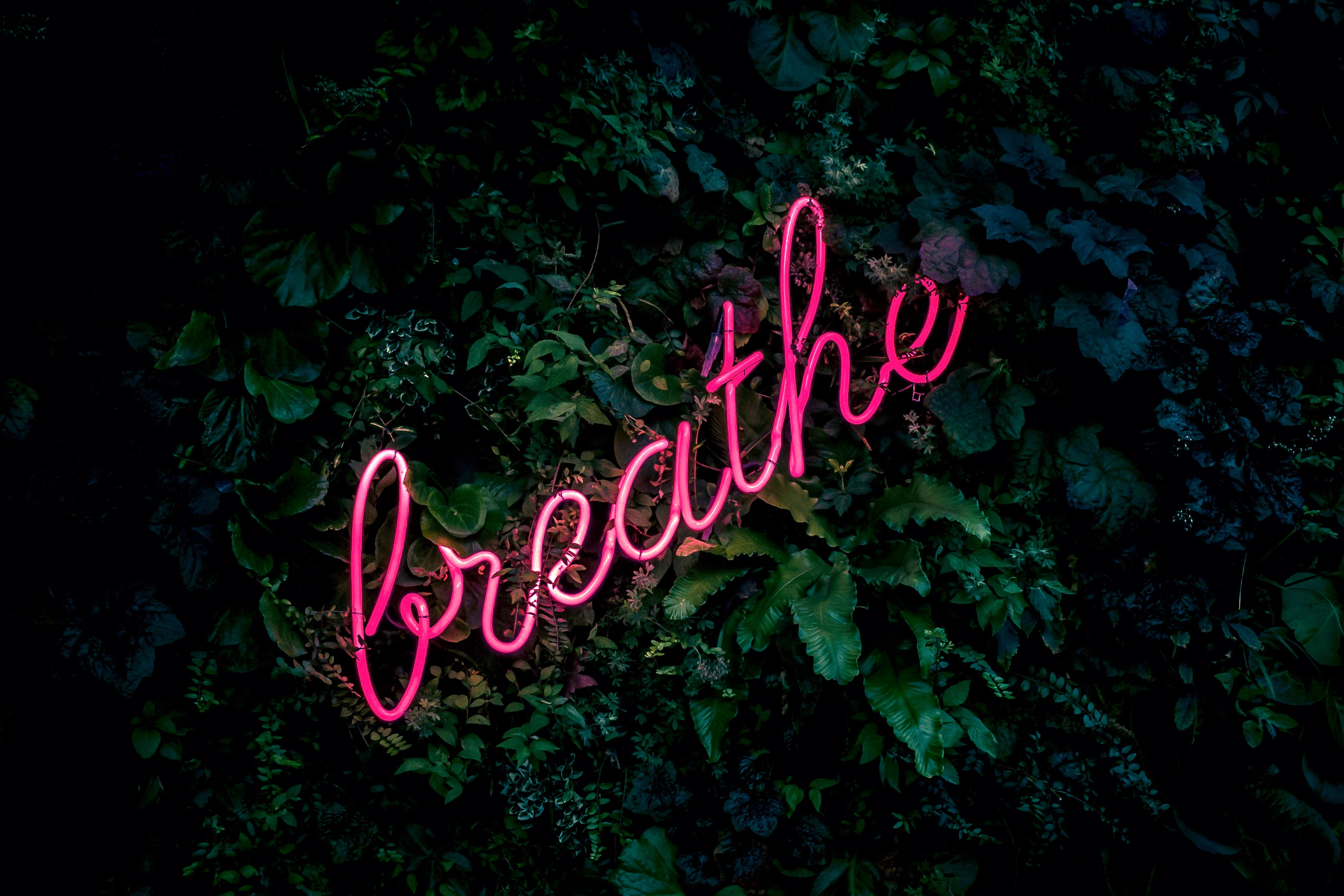 A neon sign of the word 'breathe' with leaves as a backdrop.