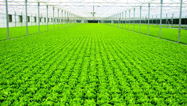 Hydroponics — Solution to global hunger? - Chris Eldridge