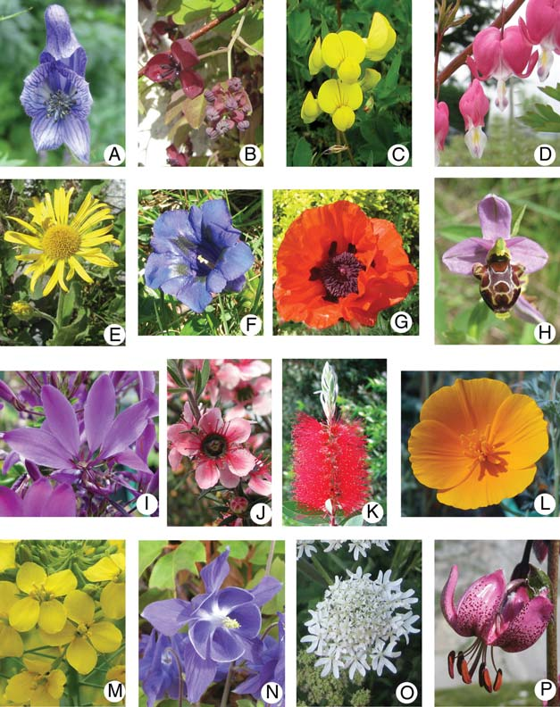 Identify Flowers using Transfer Learning