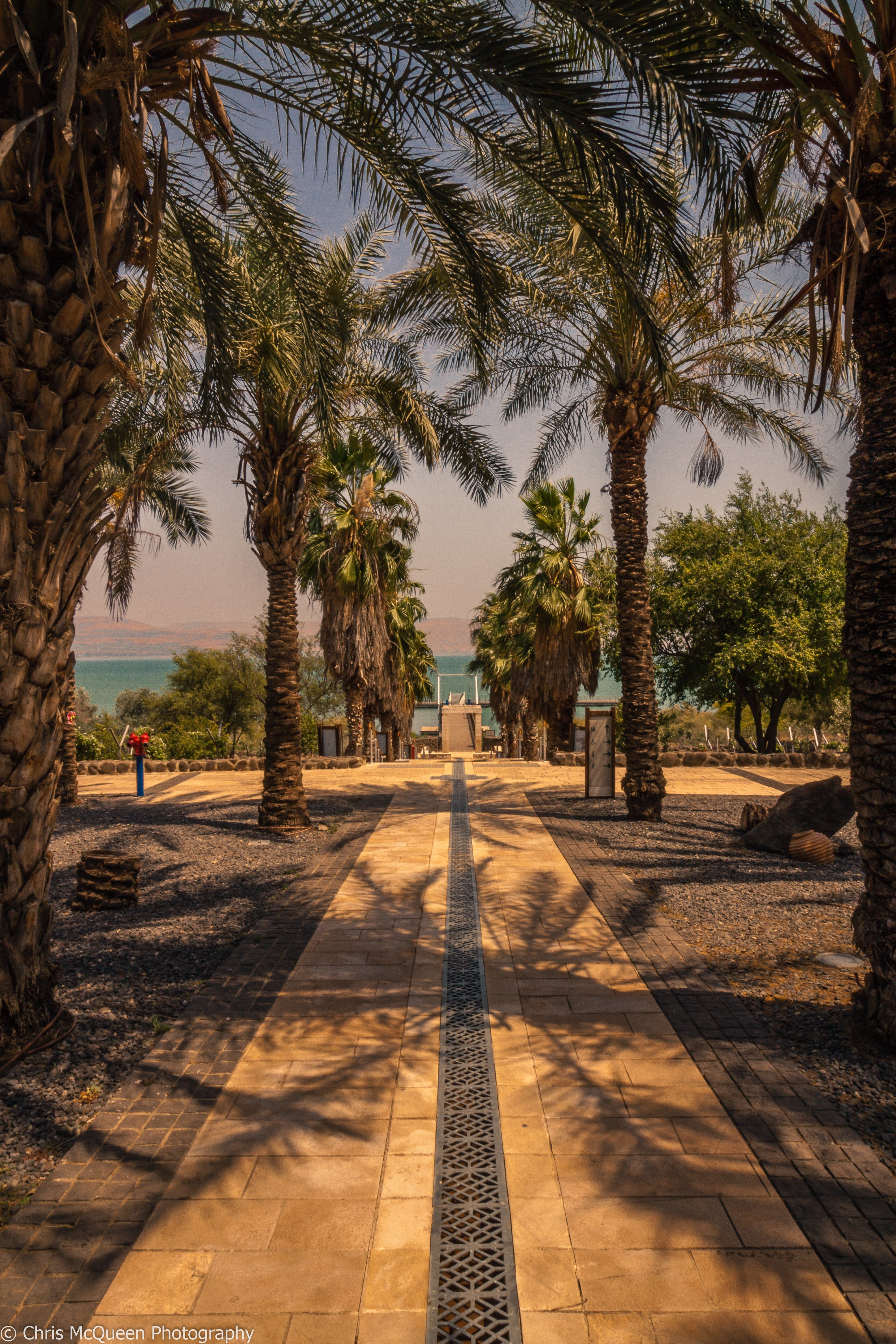 Image of palm trees in Capernaum