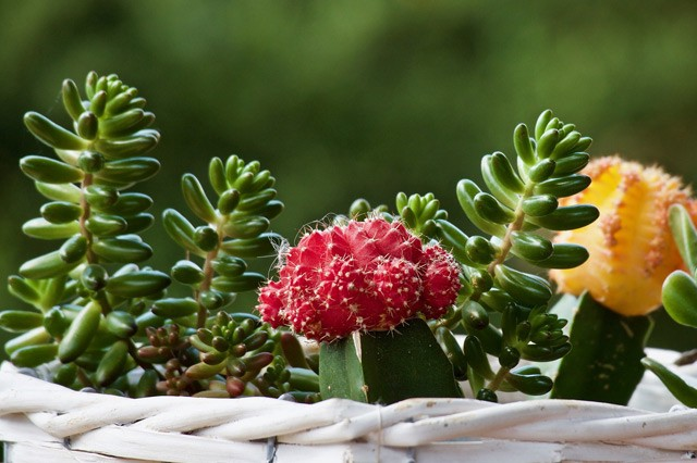 How To Care For Cactus And Succulent Plants Gardening Info