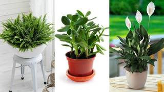 Lucky plants: create wealth, prosperity and health at home