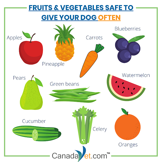 Fruits and Vegetables Your Dog Can Safely Eat | by Pet Supplies Pet Care  Products Online | CanadaVet | Medium