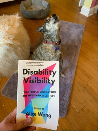 "My dog Bella Fabulous, who is a brindle colored chonk, howling as I hold up a copy of ""Disability Visibility"""