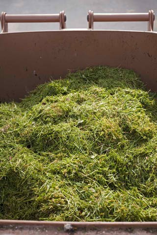 Barrel filled with grass clippings