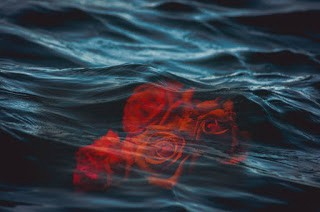 4 Red Rose under clear water