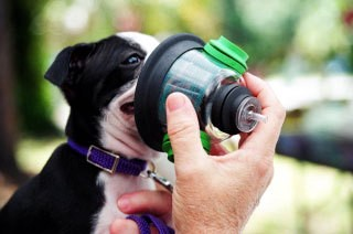 Can Dogs have Asthma? - clivenifty - Medium