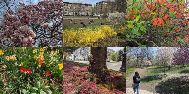 Photos: Prospect Park de Brooklyn au printemps
