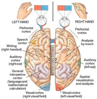 The Corpus Callosum, and Thoughts on Human-AI Collaboration ...