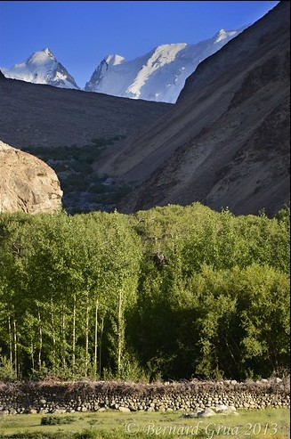 Afghan Wakhan: poplar culture protected by an enclosure covered by thorny bush — Photo Bernard Grua