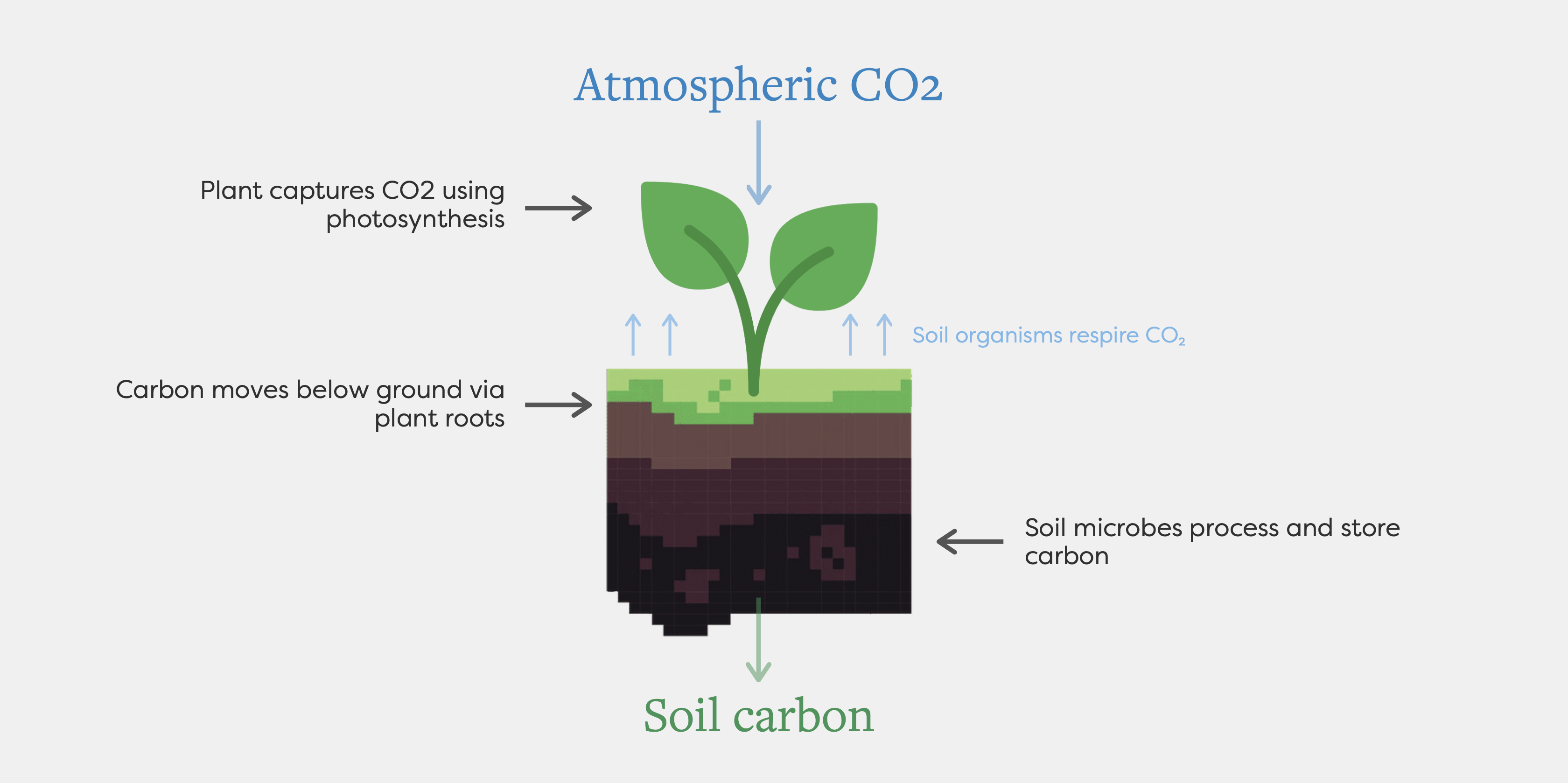 An infographic shows a plant in soil with labels describing how CO2 in the atmosphere enters the soil via roots and microbes