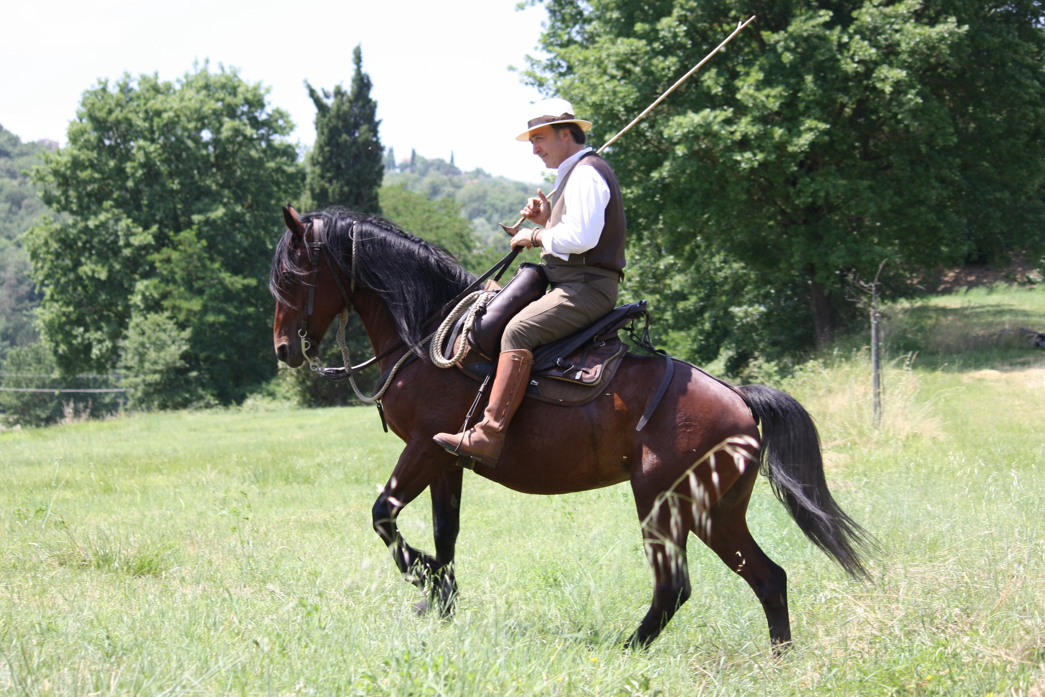 The Enigma Of Italy S Ancient Etruscan Horses By Jess Equestrian Writer Medium