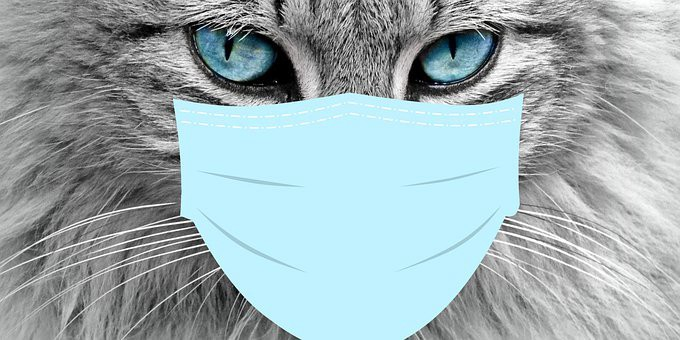 Kidney Disease In Cats When To Euthanize Right Time To Euthanize Cat Diseases By Aditya Dec 2020 Medium