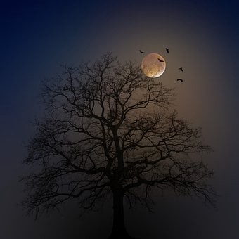 Birds fly in front of the full moon rising behind a tree.