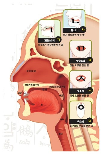 the basic consonant letter shapes (ㄱ, ㄴ, ㅁ, ㅅ, and ㅇ) imitate the positions  of the mouth, teeth, tongue and throat when pronouncing the sounds