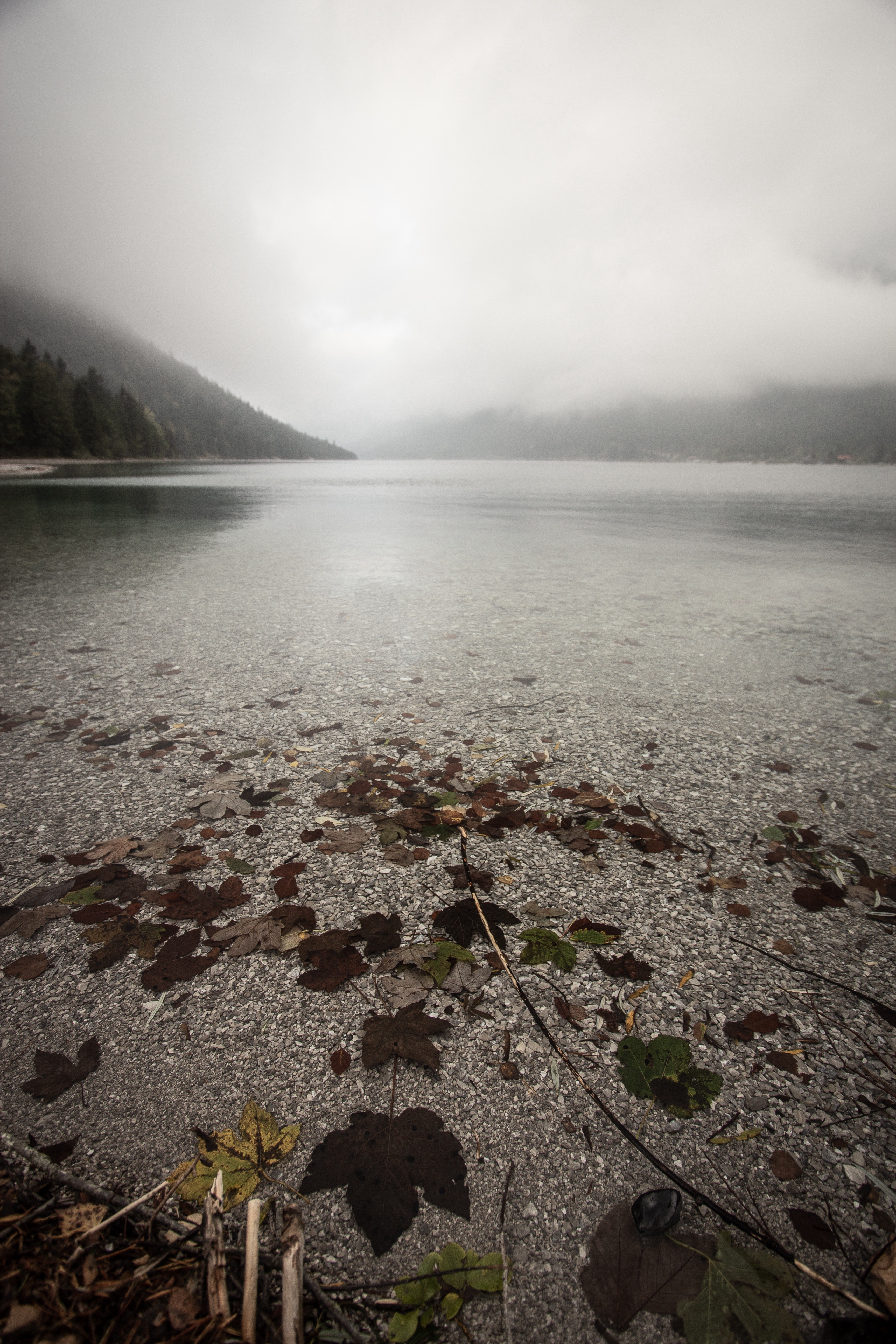 Gray fog over a body of water with fallen leaves in it