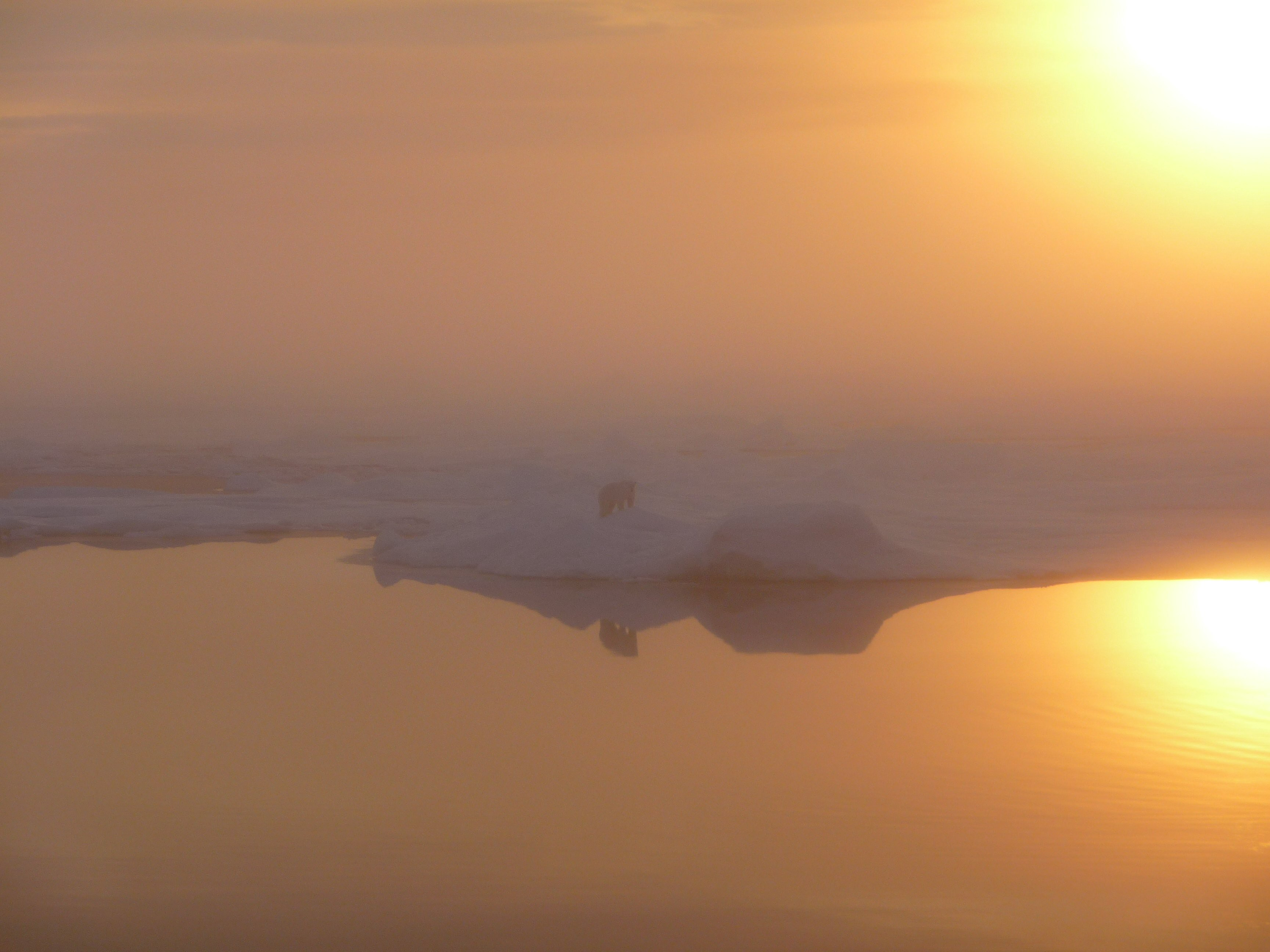 Orange sunlight in the fog reflects off of water and ice. A polar bear silhouette stands at the edge of the water.