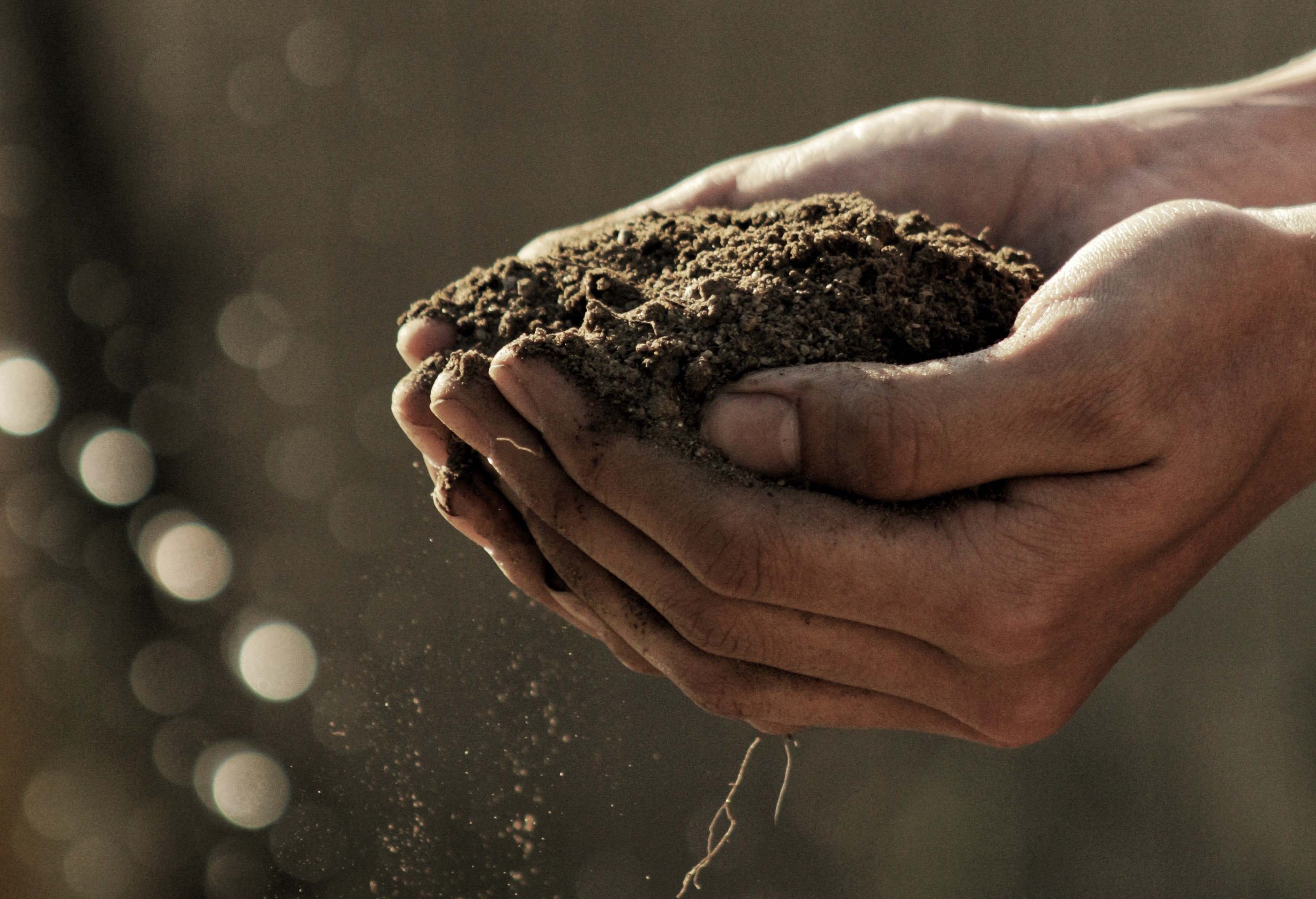 A pair of dirty hands cupping a mound of soil against a bokeh brown background