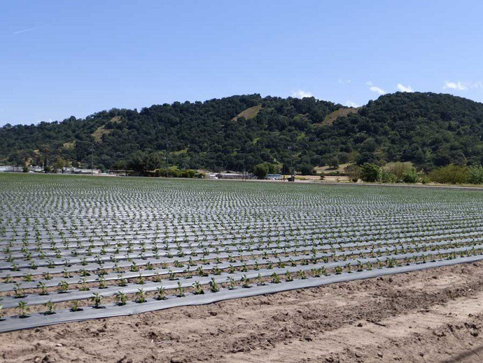Farming At The Edge Of San Jose Is Alive And Well By Protect Coyote Valley Protect Coyote Valley Medium
