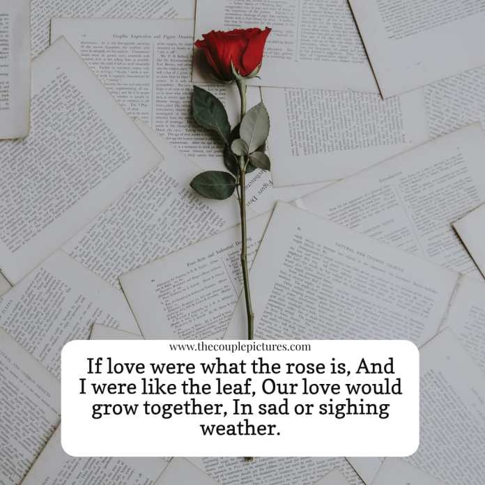 Happy Rose Day 2020 Images Quotes Wishes Status By Thecouplepictures Medium